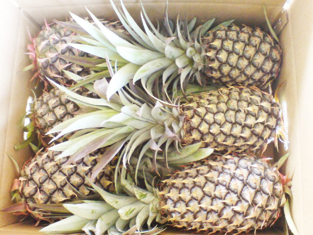 FRESH PINEAPPLE (N36)