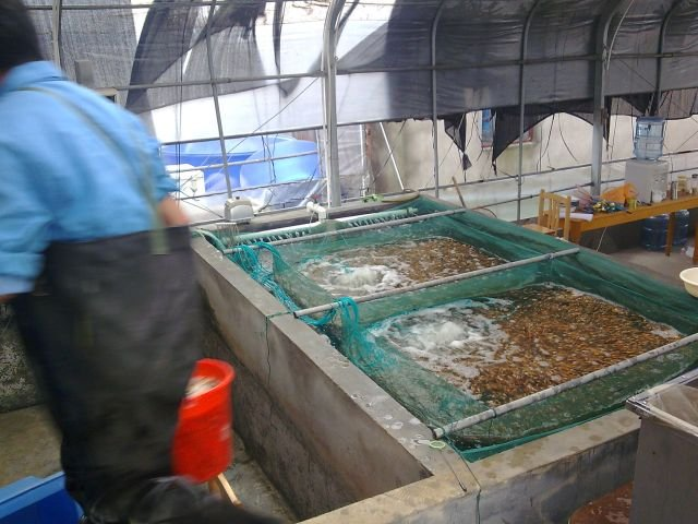 Recent visit to Wuxi Koi farm, China
