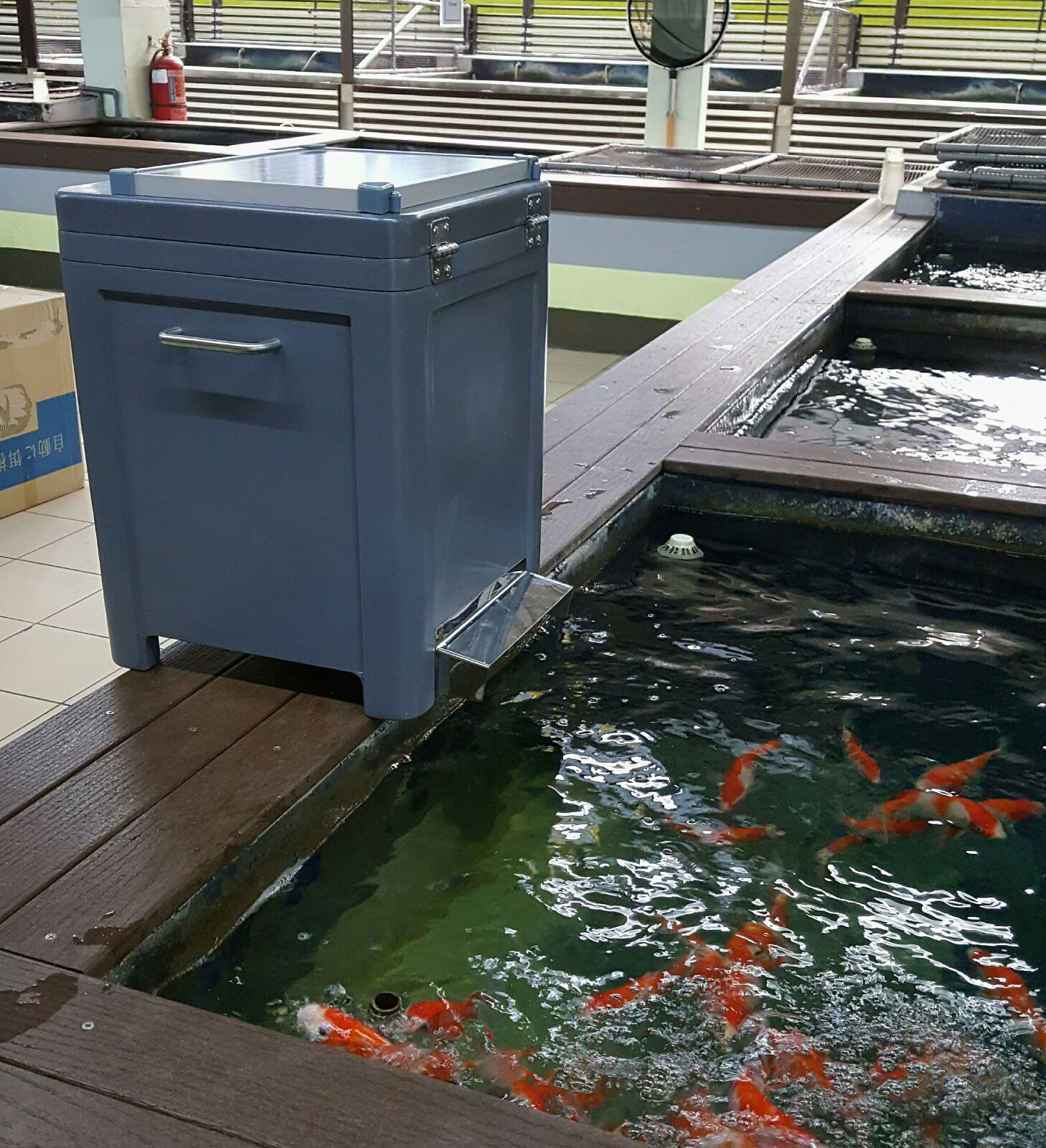 Solar koi food feeder