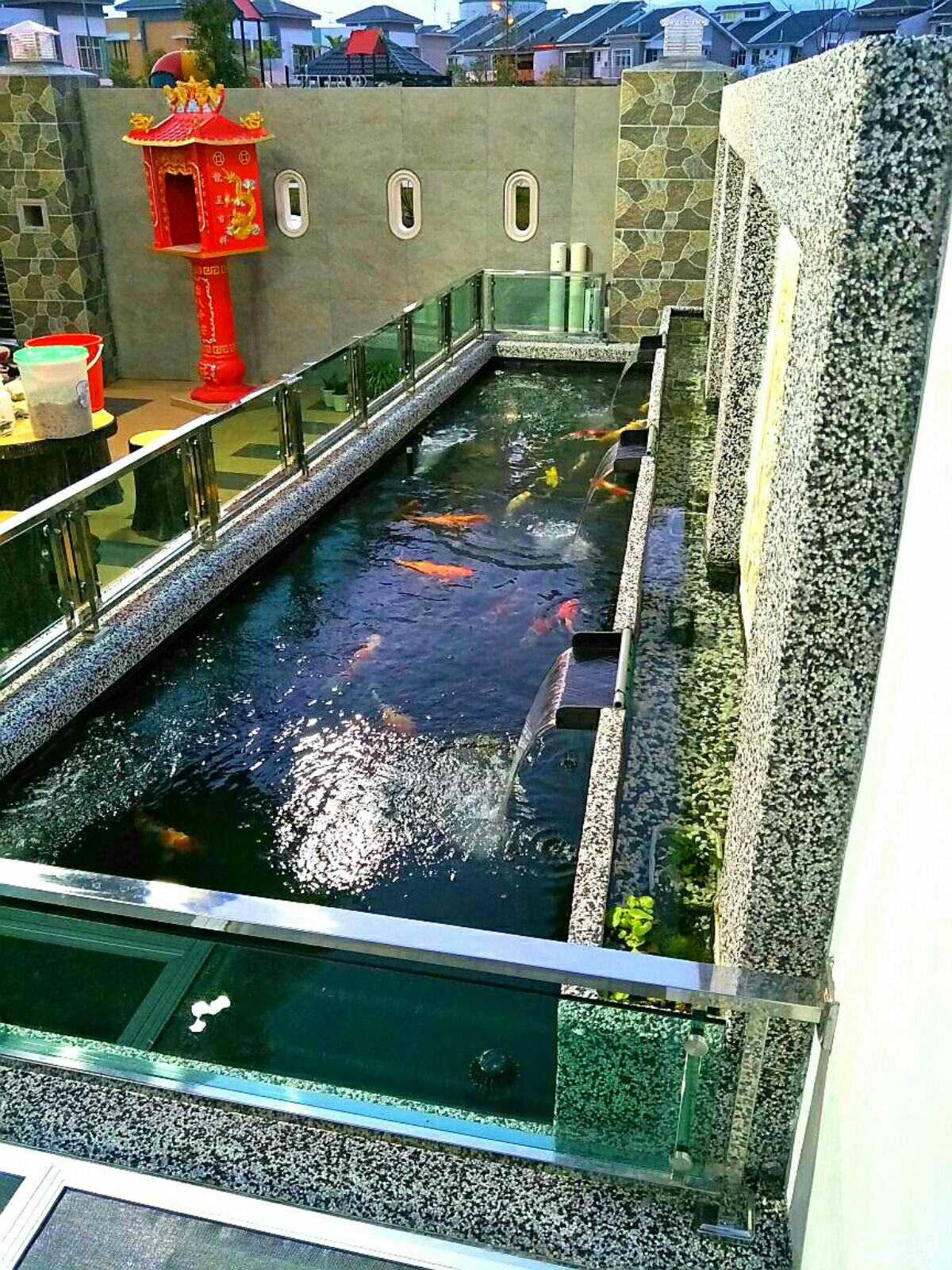 Simple and nice koi pond with clear and clean water koi for Koi pond johor bahru