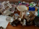 Mushroom 01.Wood Carved.Home Deco.Hiasan.Johor.Fengshui.Decoration.Water Pond