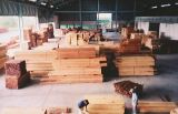 Sawn Timber Species