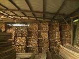 Mixed Light Hard Wood