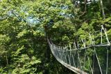FRIM Canopy Walk Tour