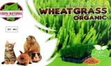 HY004 Wheat grass Organic (2 Sets)