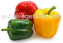 Traffic Light Capsicum