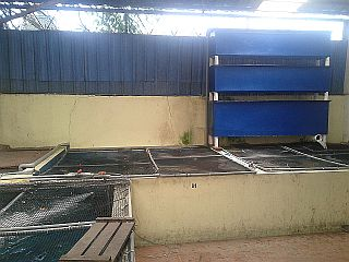 Koi hotel johor bahru jb malaysia supply supplier for Koi pond johor bahru