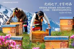 ¹±°Í²ØÃÛ Tibetan Honey