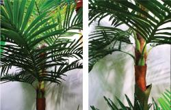 AP106 Coconut Tree Detail b