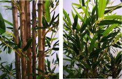 Bamboo Tree Detail AP211