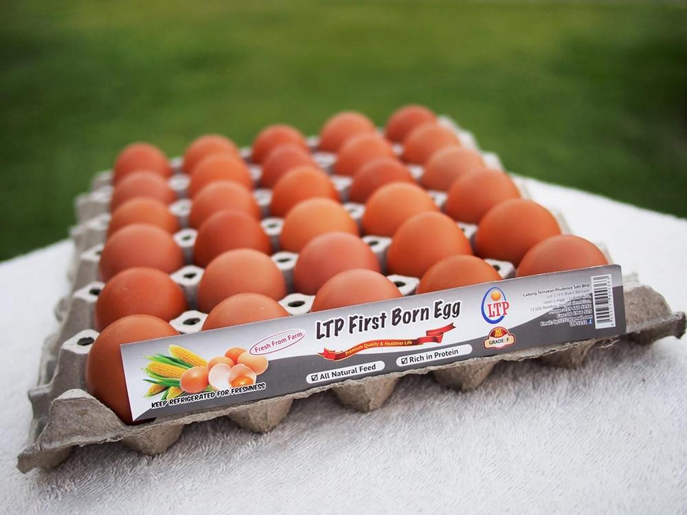 LTP First Born Egg - Grade F