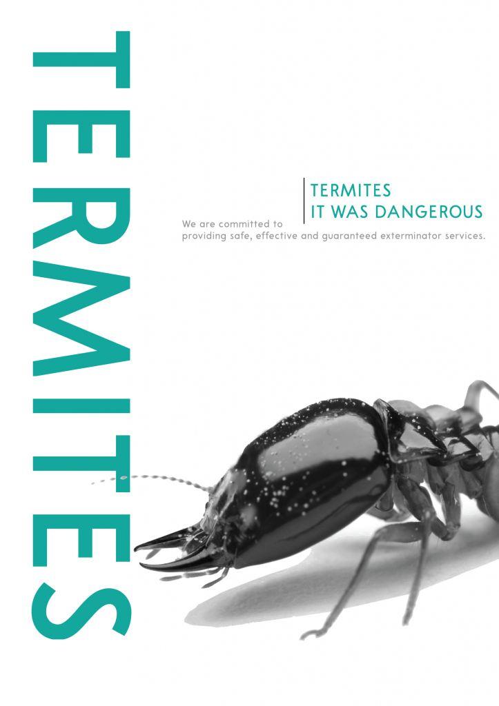 Termite / White Ant