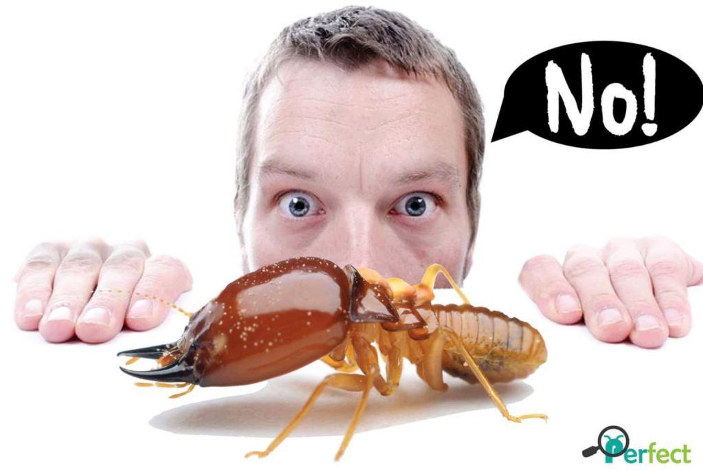 *Termite Control @ Pest Control Selangor