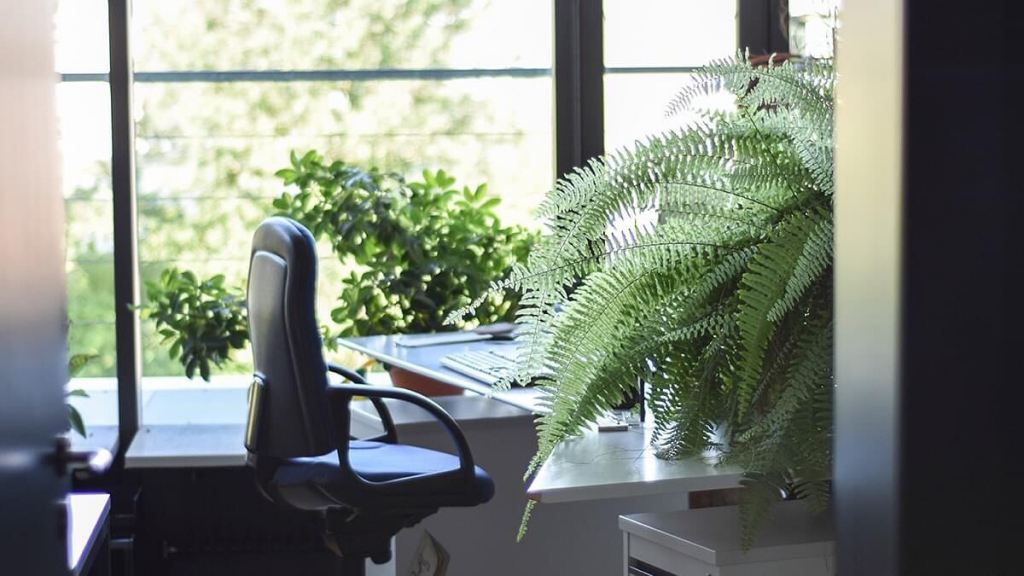 5 Home/Office Tips to Reduce Eye Strain